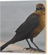 Brown Cowbird Wood Print