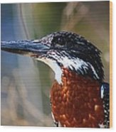 Brown Crested Kingfisher Wood Print