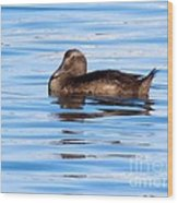 Brown Duck Wood Print