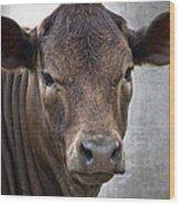 Brown Eyed Boy - Calf Portrait Wood Print