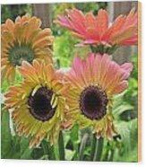 Brown Eyed Gerbera Daisies Wood Print