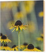 Brown Eyed Susans On Yellow And Green Wood Print