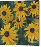 Brown Eyed Susans Wood Print