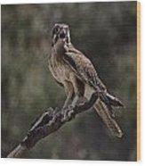 Brown Falcon V2 Wood Print