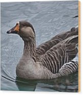 Brown Feathered Goose Wood Print
