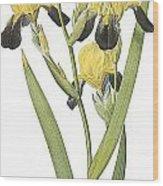 Brown-flowered Iris Wood Print