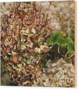 Brown Green Hydrangea Wood Print