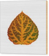 Brown Green Orange And Red Aspen Leaf 1 Wood Print