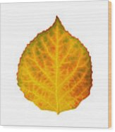 Brown Green Orange Red And Yellow Aspen Leaf 3 Wood Print