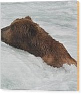 Brown Grizzly Bear Swimming  Wood Print