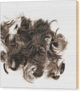 Brown Hair White Background Wood Print