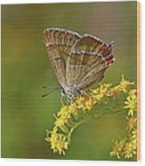 Brown Hairstreak Butterfly Wood Print by Science Photo Library