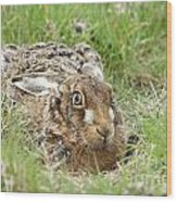 Brown Hare Wood Print