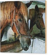 Brown Horse In Stall Wood Print
