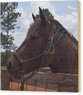 Brown Horse Wood Print