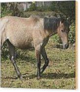 Brown Horse Walking Through A Pasture Wood Print