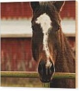 Brown Horse With Red Barn Background Wood Print