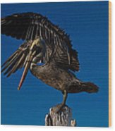 Brown King Pelican Wood Print