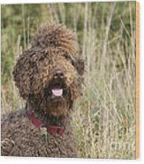 Brown Labradoodle In Field Wood Print