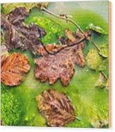 Brown Leaves In Green Pond Wood Print