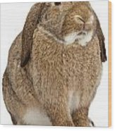 Brown Lop-earred Rabbit Isolated On White Wood Print