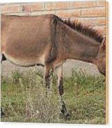 Brown Mule In Cotacachi Wood Print