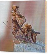 Brown Paper Moth Wood Print