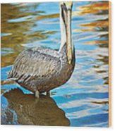 Brown Pelican Along The Bayou Wood Print