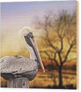 Brown Pelican At Rest Wood Print