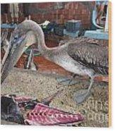Brown Pelican At The Fish Market Wood Print
