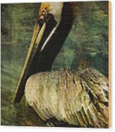Brown Pelican Beauty Wood Print