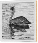 Brown Pelican - Black And White Wood Print