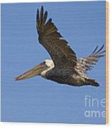 Brown Pelican Flight Wood Print