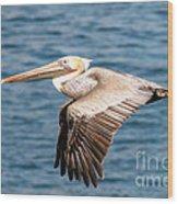 Brown Pelican Flying Wood Print