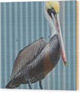 Brown Pelican II Wood Print