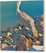 Brown Pelican In San Carlos-sonora Wood Print