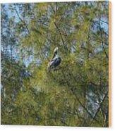 Brown Pelican In The Trees Wood Print