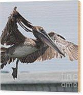 Brown Pelican Landing Wood Print