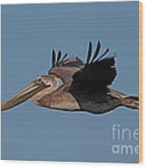 Brown Pelican Pelecanus Occidentals  Photo By Pat Hathaway 2007 Wood Print