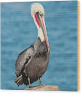 Brown Pelican Pelecanus Occidentalis Wood Print