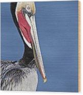 Brown Pelican Portrait Wood Print