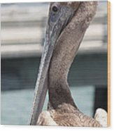 Brown Pelican Portrait Wood Print