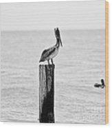 Brown Pelican - Bw Wood Print