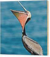 Brown Pelican Showing Pouch Wood Print