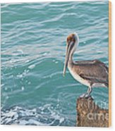 Brown Pelican South Jetty Venice Florida Wood Print