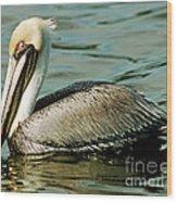 Brown Pelican Swimming Wood Print