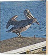 Brown Pelican Takes Flight Wood Print