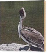 Brown Pelican Tall Wood Print