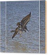 Brown Pelican - Triptych Wood Print