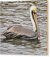 Brown Pelican1 Wood Print